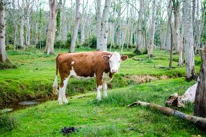 Blogindlæg om plantedrik vs komælk