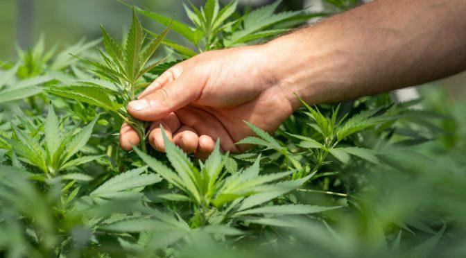 Episode 3: Mindfulness, cannabis og OCD